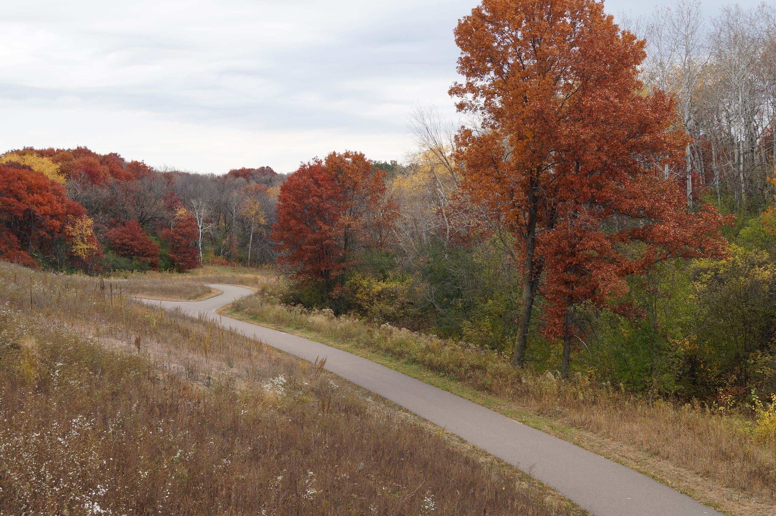 Cottage Grove Park Ravine in fall